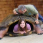 A large oversized turtle replica offers a glimpse of what it is like to be one.