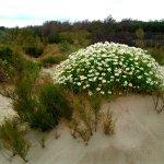 reserve-naturelle-du-bagnas , les dune de la plage natuturite.
