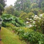 Beautiful gardens in the rain