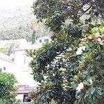 Magnolia blossom?