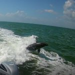 dolphins in our wake