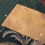 Food on swiped on to carpet because no one was cleaning tables