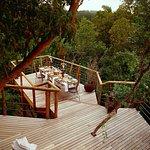 Tsala Treetop Lodge Outdoor Dining