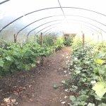 Vineyard greenhouse