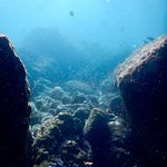 Lumba Lumba Diving Centre Foto