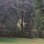 Photo of Penang Botanical Gardens