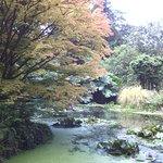 Photo of Trewidden Garden