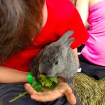Adorable bunnies that kids can hold for hours