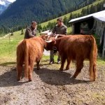 Hiking in the surroundings you even will find highlanders on 1800 m