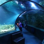 Tunnel through the big tank