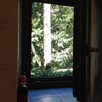 Il parco che si vede dalla finestra del bagno