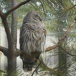 BC Wildlife park, Kamloops