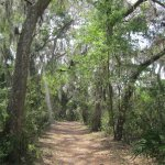 Nature walk trail view #2