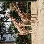 Photo of Koelner Zoo