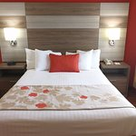 1 Queen 1 Sofa Beds Suite / 1 Queen 1 Sofa Beds Accessible Suite / 1 Queen Bedroom 1 Sofa Beds S