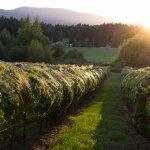 Rocky Creek Winery Foto
