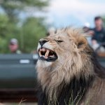 NYATI Big 5 Safari