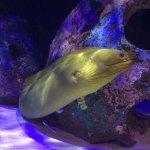 Some photos of our trip to Motes Marine Laboratory and Aquarium!