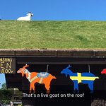 Live goats on the grass roof. Really.