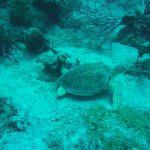 Saw 4 sea turtles during the dive and 5 snorkeling and a beautiful ray.