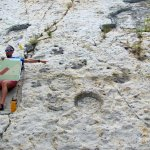 Dino tracks explained by our fun tour guide