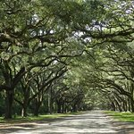 Wormsloe Historic Site Foto