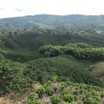 Hacienda Guayabal, the most amazing experience in the coffee region!