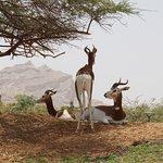 Al Ain Zoo Foto