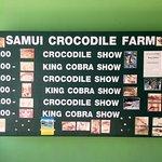 Show times / performances at crocodile/snake farm