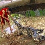 Crocodile farm, show
