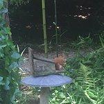Photo of Tresco Abbey Garden & Valhalla Collection