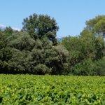 Photo de Residence Les Demeures du Ventoux
