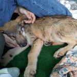 Photo of Seacrest Wolf Preserve