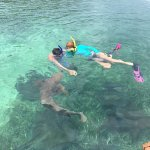 Swimming with nurse sharks and Rays