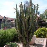 Photo of Ramada Limited Tucson West