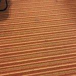 carpet needs to go