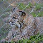 Photo de Lakota Wolf Preserve