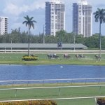 Horse races at Gulfstream