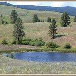 Swan Lake Bird Sanctuary
