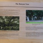 Banyan tree info
