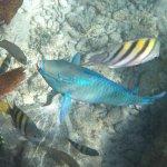 Beautiful underwater fish