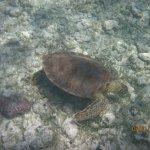 Beautiful underwater turtle