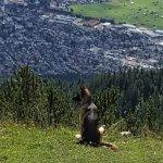 Wank Mountain Foto