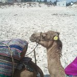 Photo de Palmyra Beach