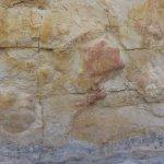 Ankylosaurus footprints