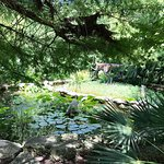 The Zilker Botanical gardens were absolutely fabulous.  We visited the gardens as a family and e