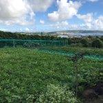 Quinta dos Figos Foto