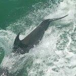 Dolphin Encounter Photo
