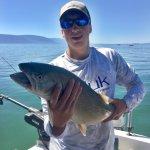 bullhead trout