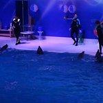 Dolphin Show.